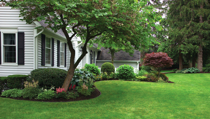 Fall Needs And Lawn Repair Nature S Choice Care