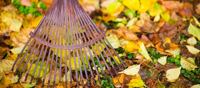 Your Lawn's Winter Survival Guide