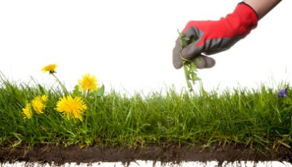 Using Cultural Practices and Non-Chemical Weed Control in the Landscape and Garden